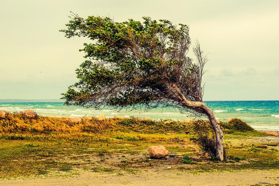 Tree, Beach, Sea, Wind, Scenery, Larnaca, Cyprus