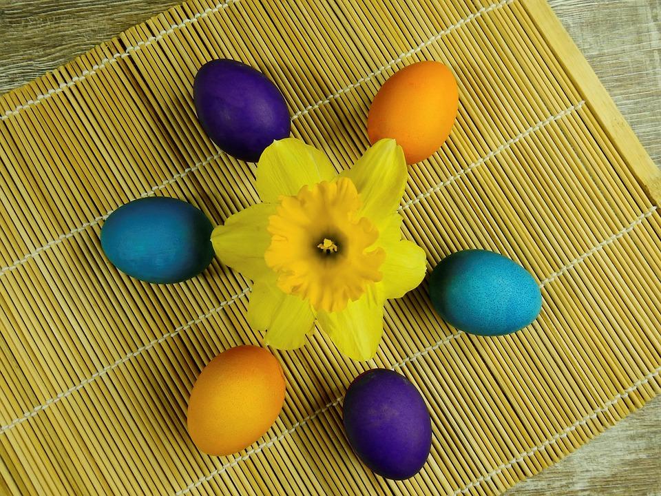 Blomma, Växt, Natur, Narcissus, Osterglocken, Blomning