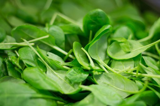 Spinach Plant Nutrition Eat Fresh Healthy