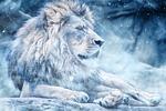 lion, snow, lying down