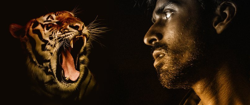 Predator Tiger Man Fear View Tooth Defense