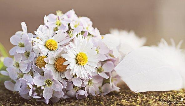 Extrem Fleurs, Des, Champs - Images gratuites sur Pixabay PX27