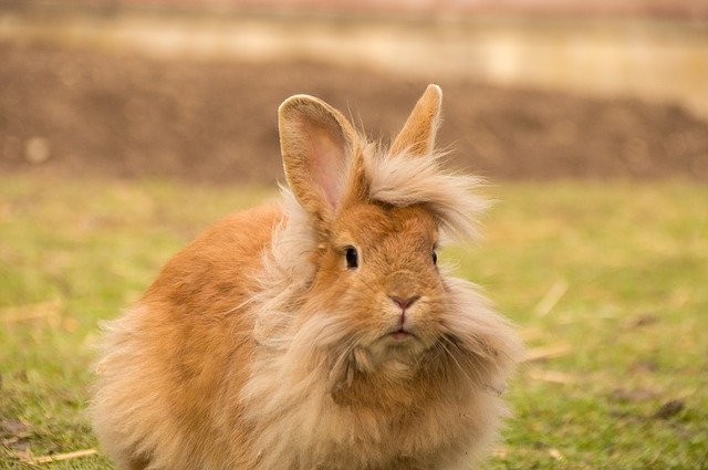 lion rabbit thesis advisor Once, it was the turn of a rabbit to go to the lion's den the rabbit was old and wise he was unwilling to go, but the other animals forced him to go.