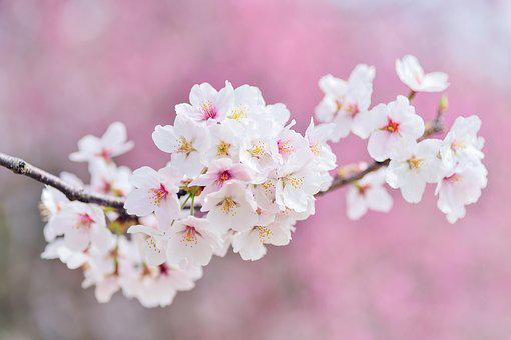Flores Naturales Imagenes Pixabay Descarga Imagenes Gratis