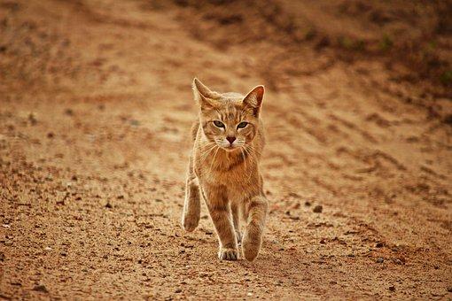 Cat, Tiger Cat, Mieze, Breed Cat