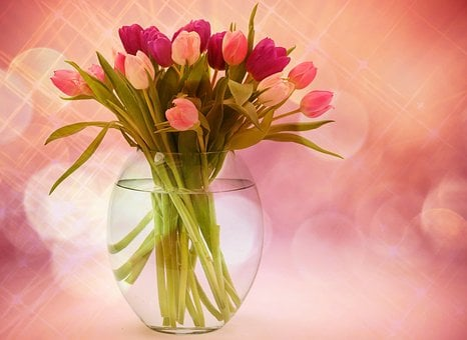 Flower Vase Images Pixabay Download Free Pictures