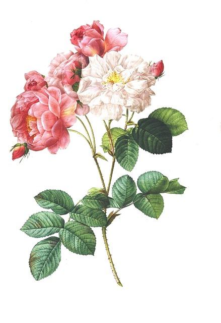 Sketch Of Flower Vase  Pencil Drawings Sketch