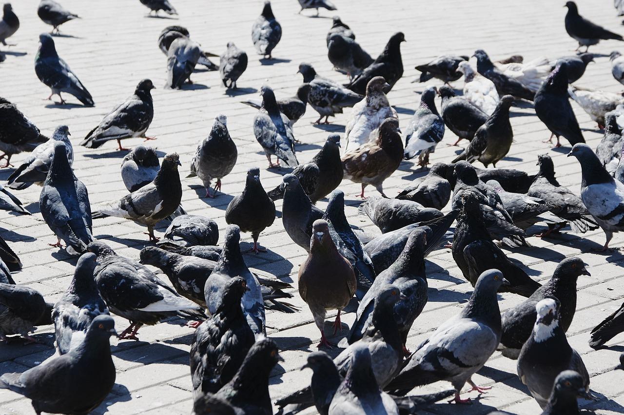 птицы нашего города картинки