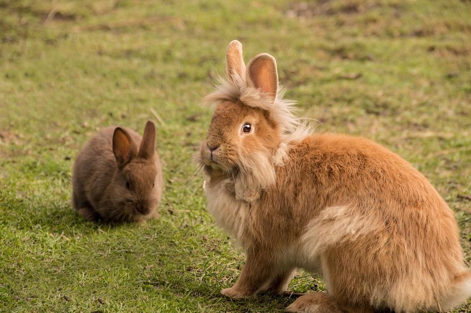 Super Photo gratuite: Lapin, Mignon, Fourrure, Bunny - Image gratuite  ZE13