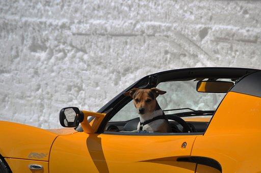 Voiture De Sport, Cabriolet, Luxe