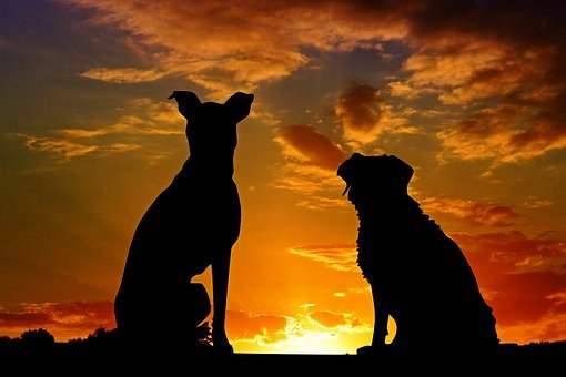 Dogs, Animals, Sunset, Friends