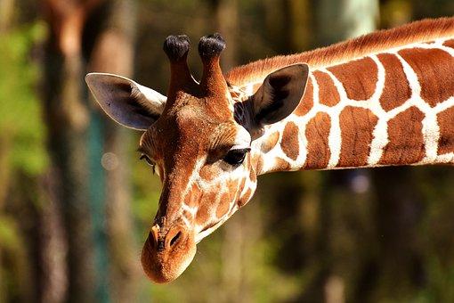 Extrêmement Animaux, Sauvages - Images gratuites sur Pixabay TZ97