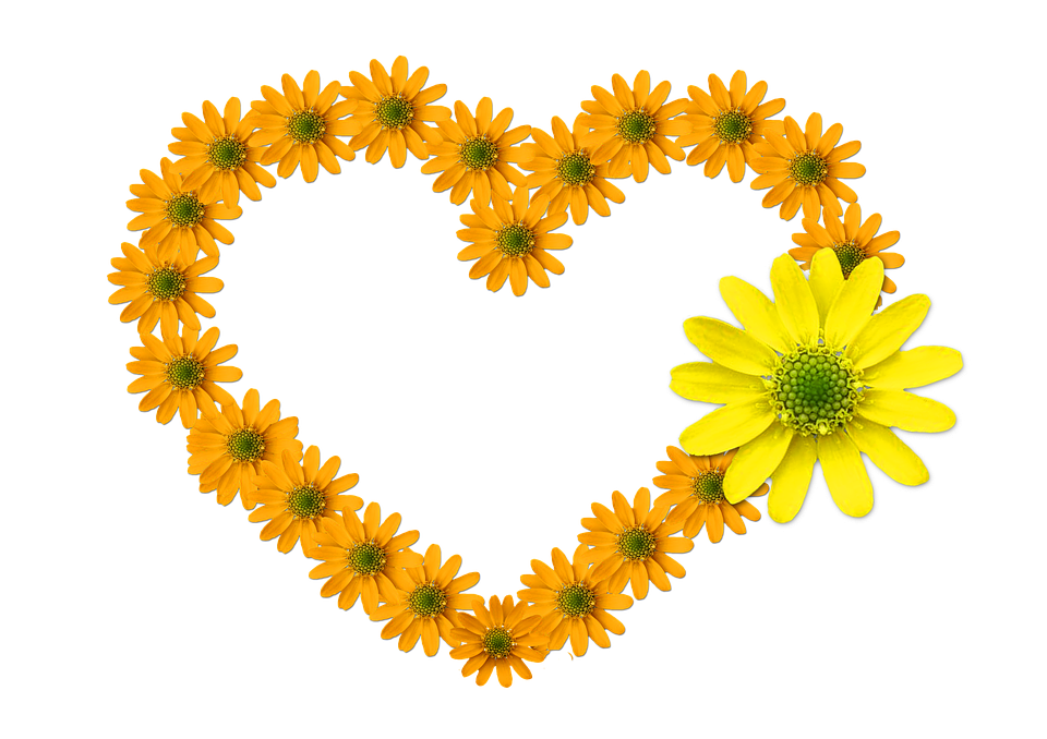 heart, shaped  free images on pixabay, Beautiful flower