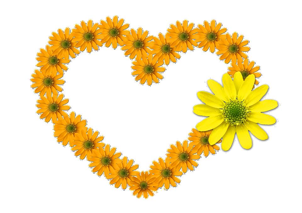 heart, shaped  free images on pixabay, Beautiful flower