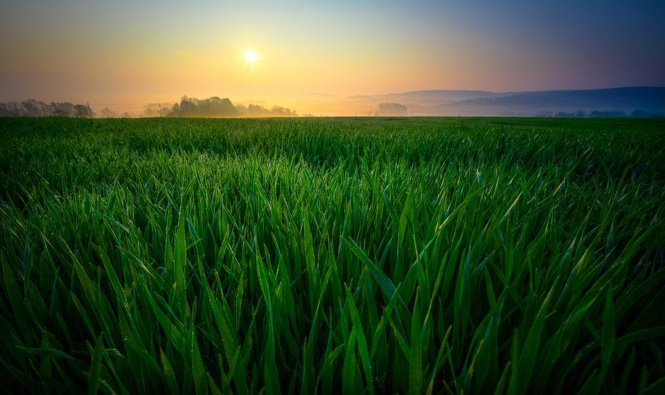 Sunrise Field Nature 183 Free Photo On Pixabay