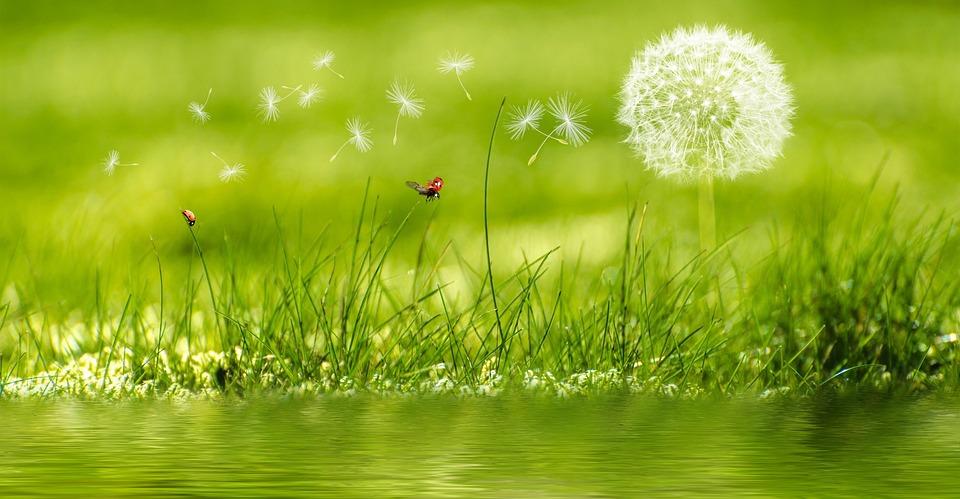 Fiore, Impianto, Rush, Erba, Verde, Natura, Paesaggio