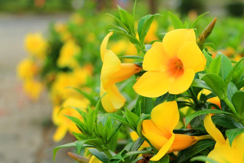 Flower yellow green free photo on pixabay flower yellow green yellow flowers summer season mightylinksfo