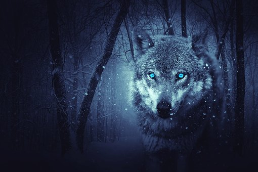Wolf Images Pixabay Download Free Pictures