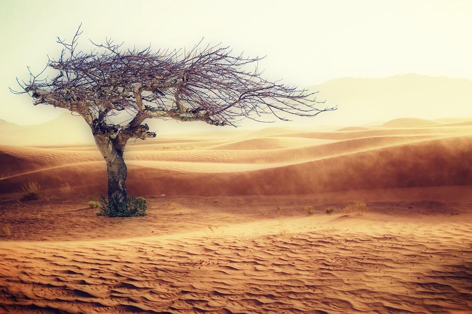 Desert, Drought, Landscape, Sand, Tree, Nature