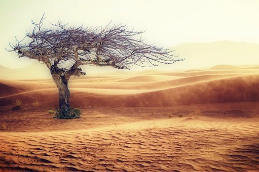 Desert Drought Landscape Sand Tree Nature