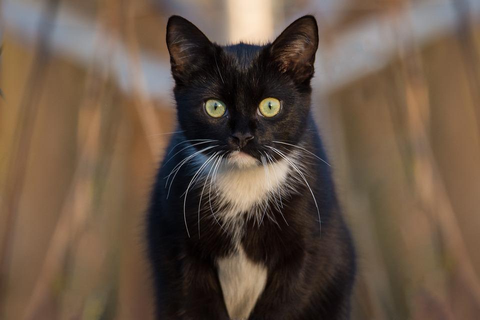 Zadarmo čierne dievča mačička pics