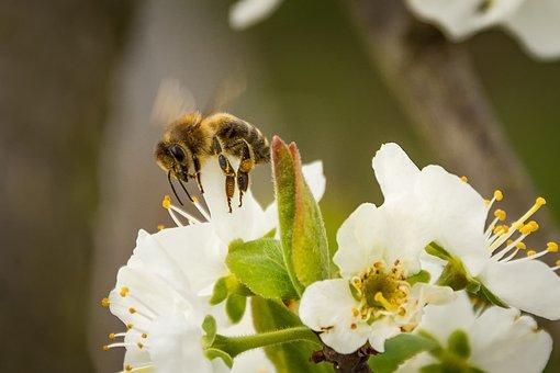 美术,不会,花园,api,性质,花粉,花,蜂蜜,昆虫,蜜蜂长颈鹿开花跳舞的动物图片