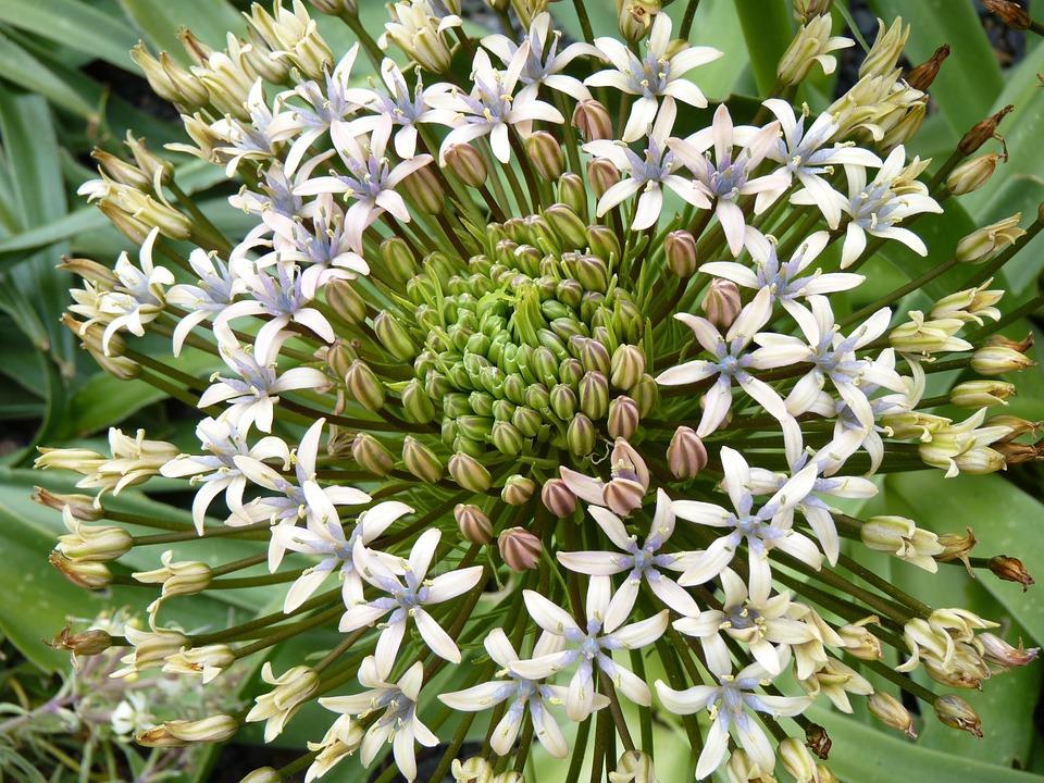 Blume Weiß Weiße · Kostenloses Foto auf Pixabay