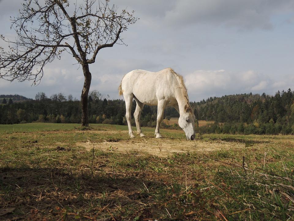 koně podzim na podzim zvíře koní krajina farma 887bde0a2c