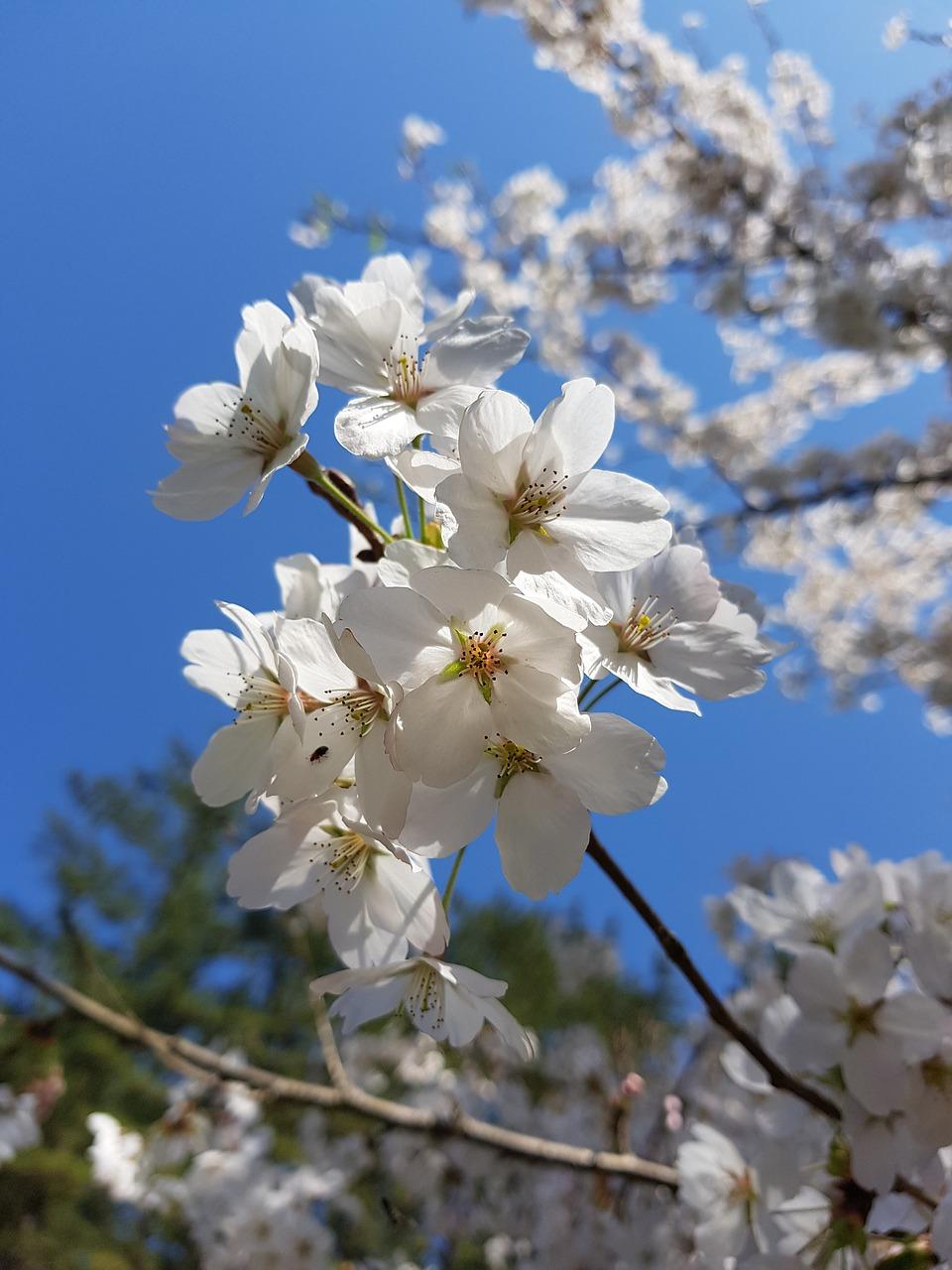 Цветочки весенние картинки