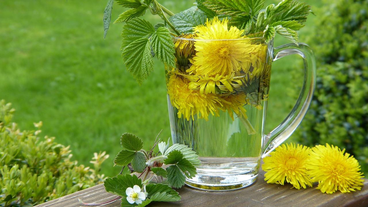 Dandelion Taraxum Tee Strawberry - Free photo on Pixabay