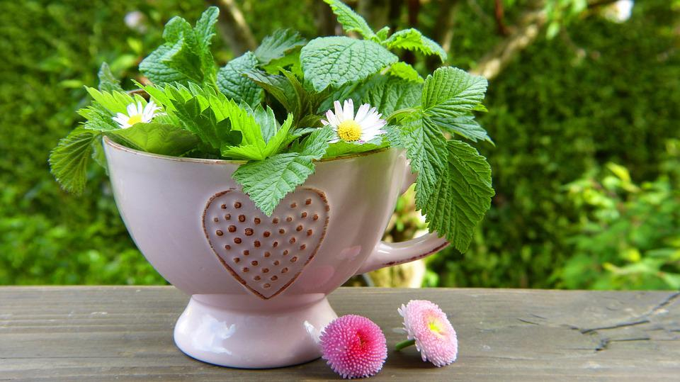 Herbes, Feuilles, Fleurs, Tasse À Thé, Coeur