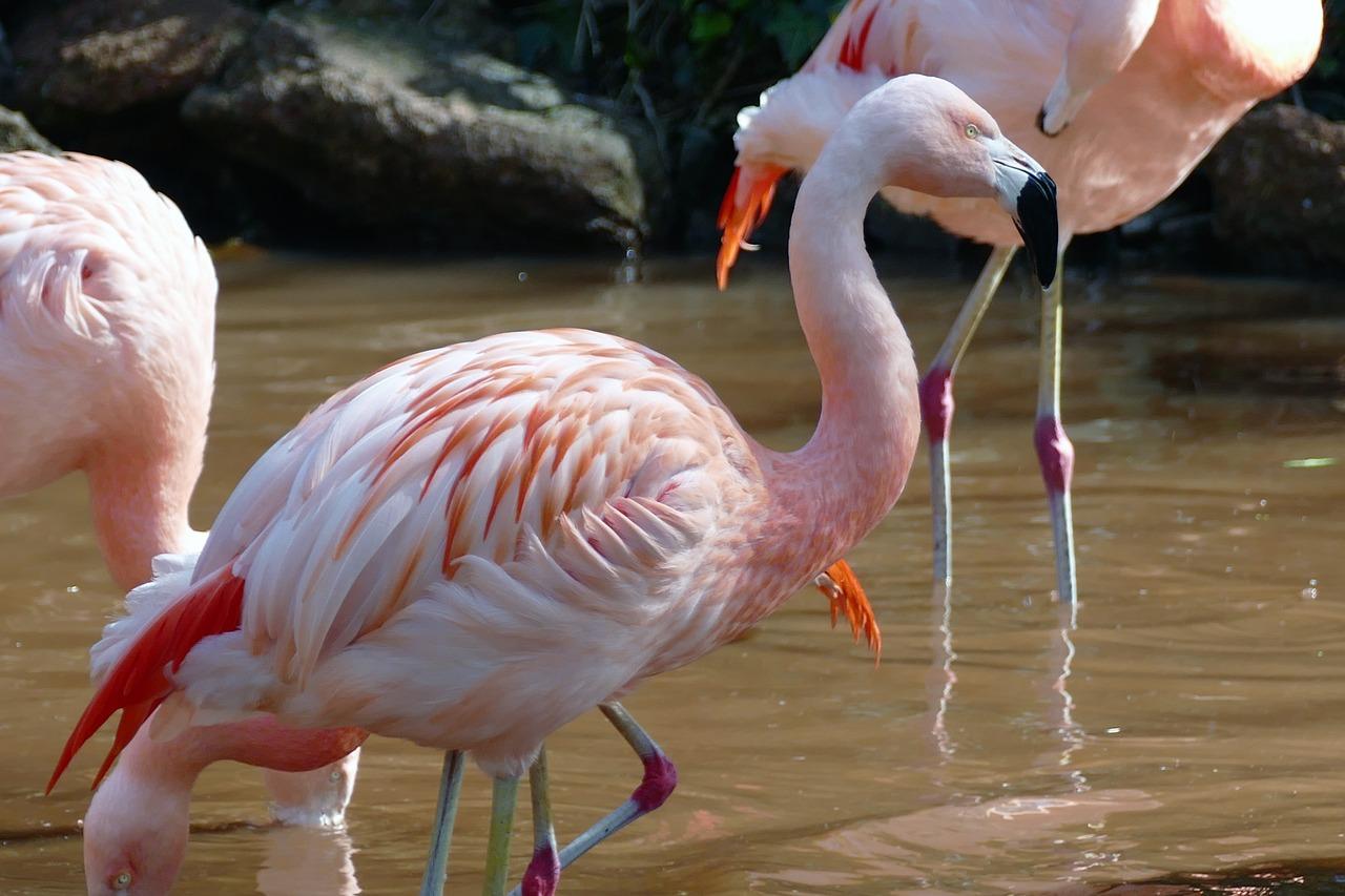собственно птица фламинго картинки взять липкую ленту