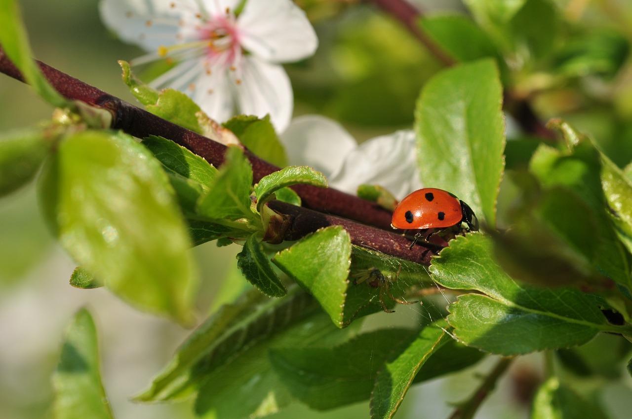 Картинки весна насекомые