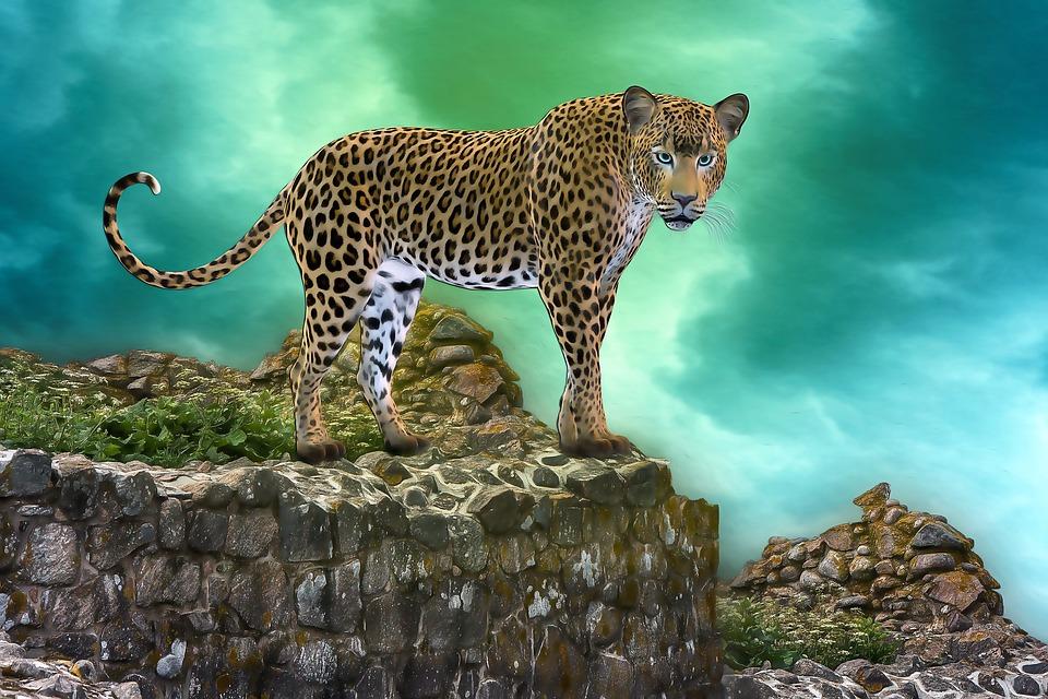 Duży Kot Renderowania Lampart Darmowy Obraz Na Pixabay