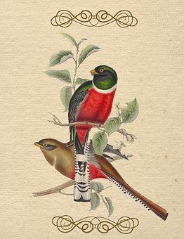 Oiseau, Vintage, Couleur, Vieux, Papier