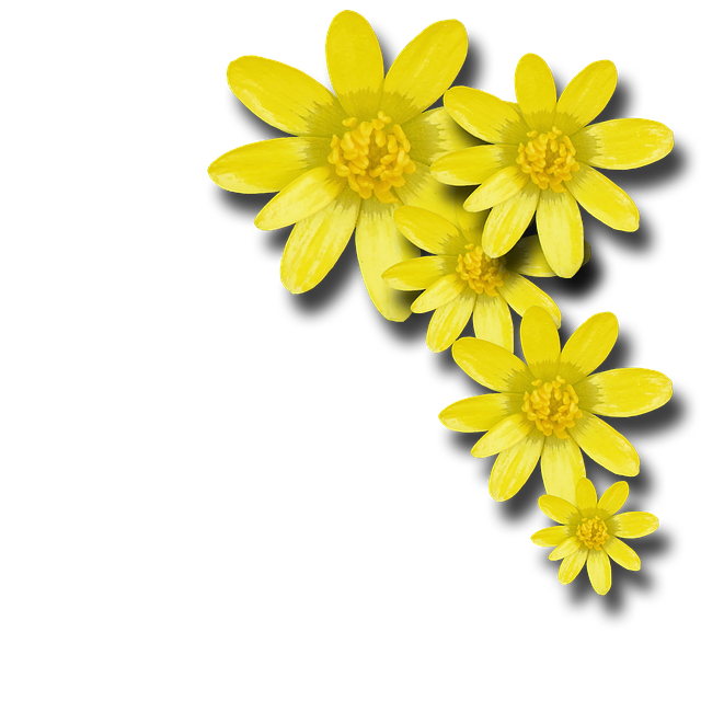 Flowers Spring Yellow 183 Free Image On Pixabay