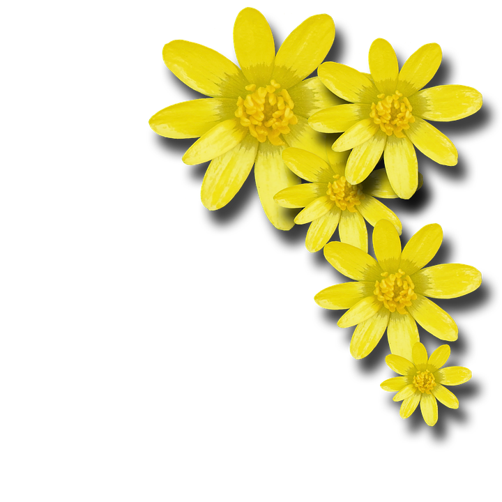Free yellow flowers png for Cadre floral mural