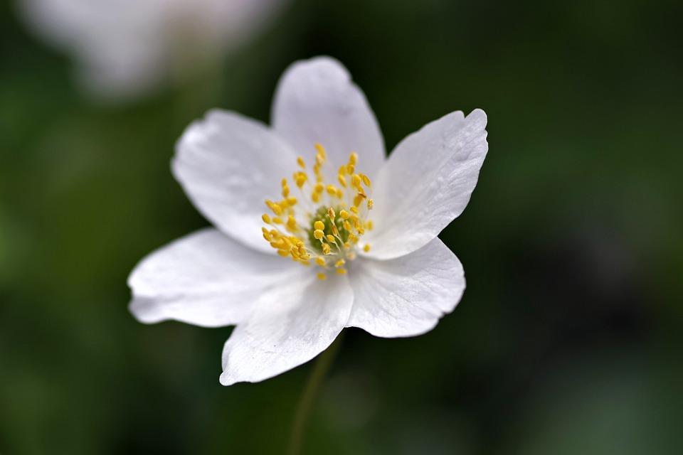 White flower yellow stamens biel free photo on pixabay white flower yellow stamens biel the petals tiny mightylinksfo