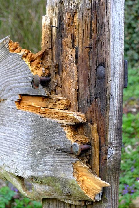Holz Zaun Nagel Kostenloses Foto Auf Pixabay