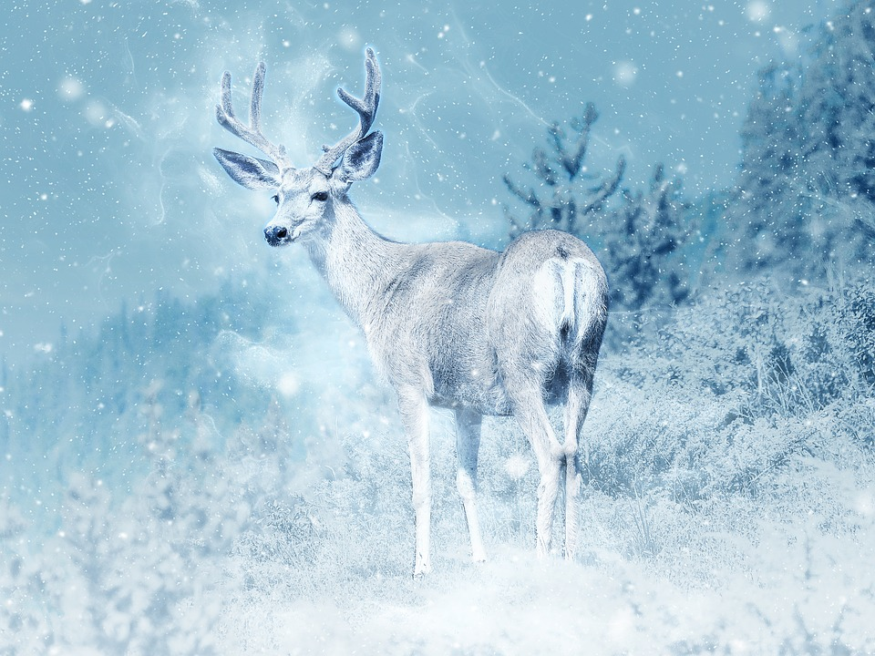Free Photo Moose Snow Elk Animal Art Free Image On