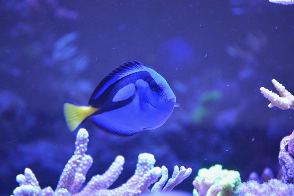Free photo fish water sea blue ocean dorie free for Sea water fish