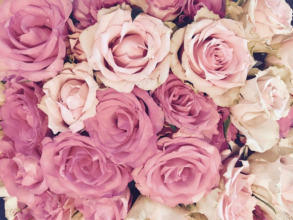 Rozen Bloesem Roze Gratis Foto Op Pixabay