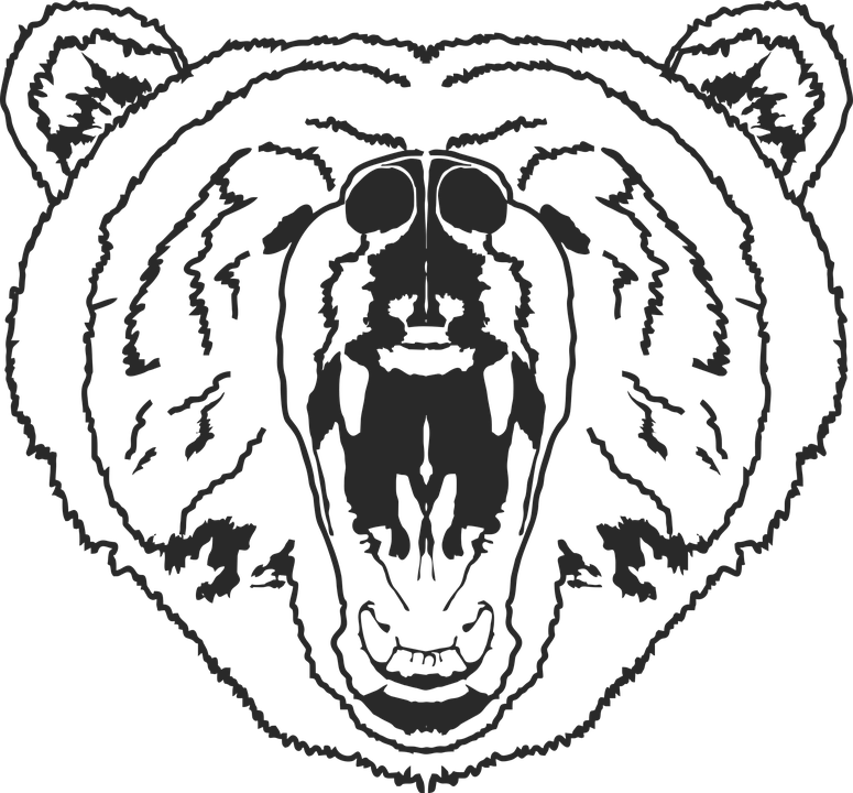 Bear Face Line Drawing : Grizzly bear face outline pixshark images