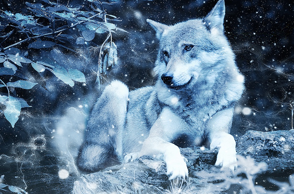 wolf animal predator art vintage snow nature