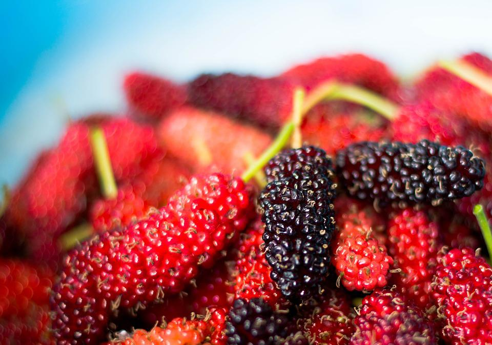 Mulberry Fruit Hd Picture