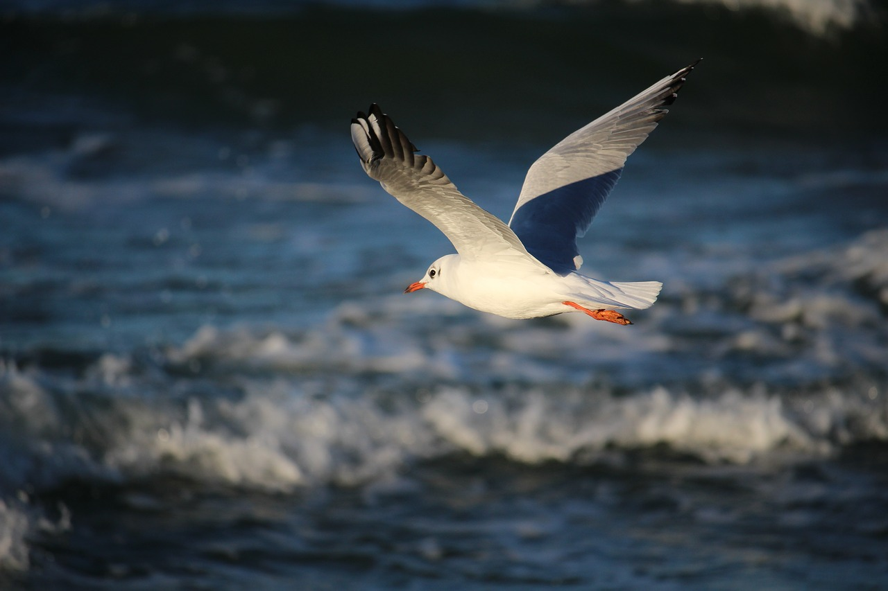чайка над морем фото выражению самой