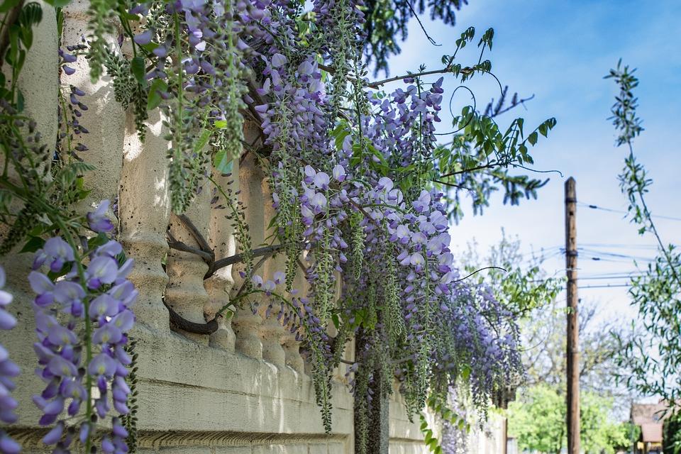 Stenen Muur Tuin : Muur hangende bloemen stenen · gratis foto op pixabay