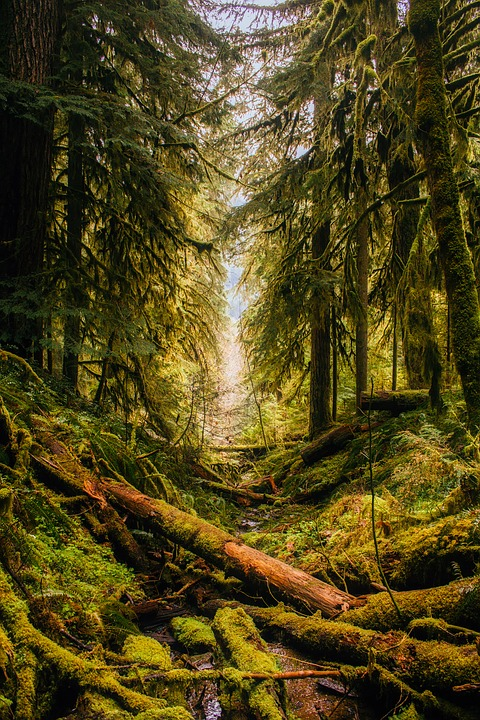 Wild Woods Landscape Painting