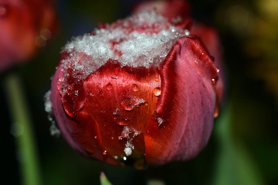 Coeur damp amour images gratuites sur pixabay - Images coeur gratuites ...
