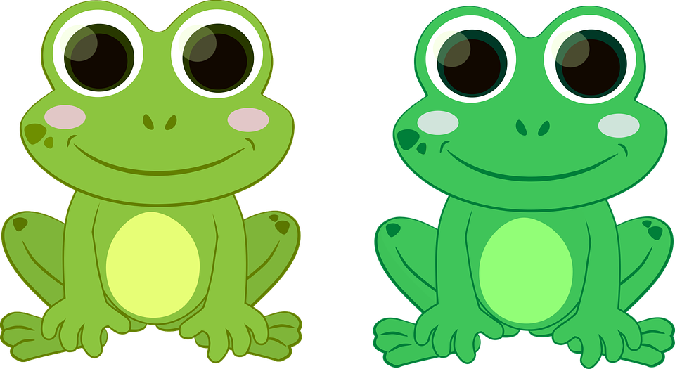 frog green toad free vector graphic on pixabay rh pixabay com